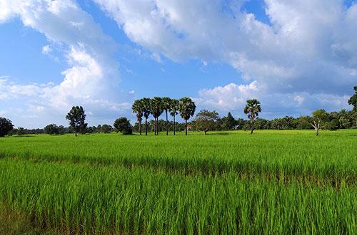 カンボジア・サイクリングツアー2014 アンコール遺跡&田舎道を走る 6日目 ベンメリア遺跡14