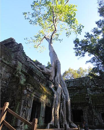 カンボジア・サイクリングツアー2014 アンコール遺跡&田舎道を走る 7日目 アンコールワット&アンコールトム16