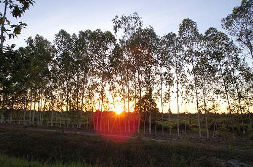 カンボジア・サイクリングツアー2014 アンコール遺跡&田舎道を走る 7日目 アンコールワット&アンコールトム20